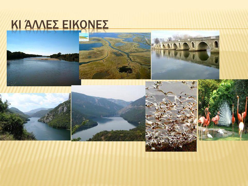  Η χλωρίδα στην περιοχή είναι η χαρακτηριστική ενός πλούσιου μεσογειακού υγροτόπου.