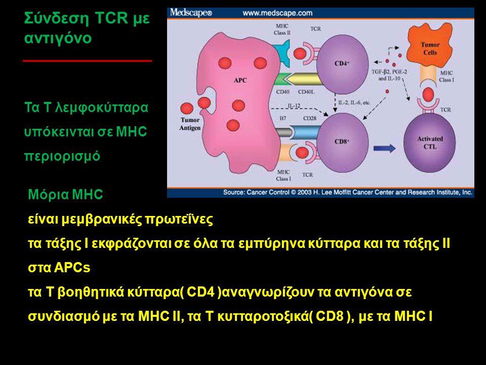 Σύνδεση TCR με αντιγόνο Μόρια MHC είναι μεμβρανικές πρωτεΐνες τα τάξης Ι εκφράζονται σε όλα τα εμπύρηνα κύτταρα και τα τάξης ΙΙ στα APCs τα Τ βοηθητικ