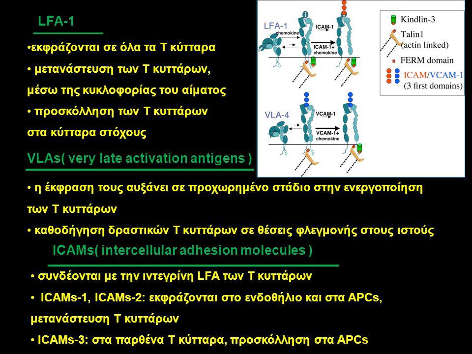 VLAs( very late activation antigens ) η έκφραση τους αυξάνει σε προχωρημένο στάδιο στην ενεργοποίηση των Τ κυττάρων καθοδήγηση δραστικών Τ κυττάρων σε
