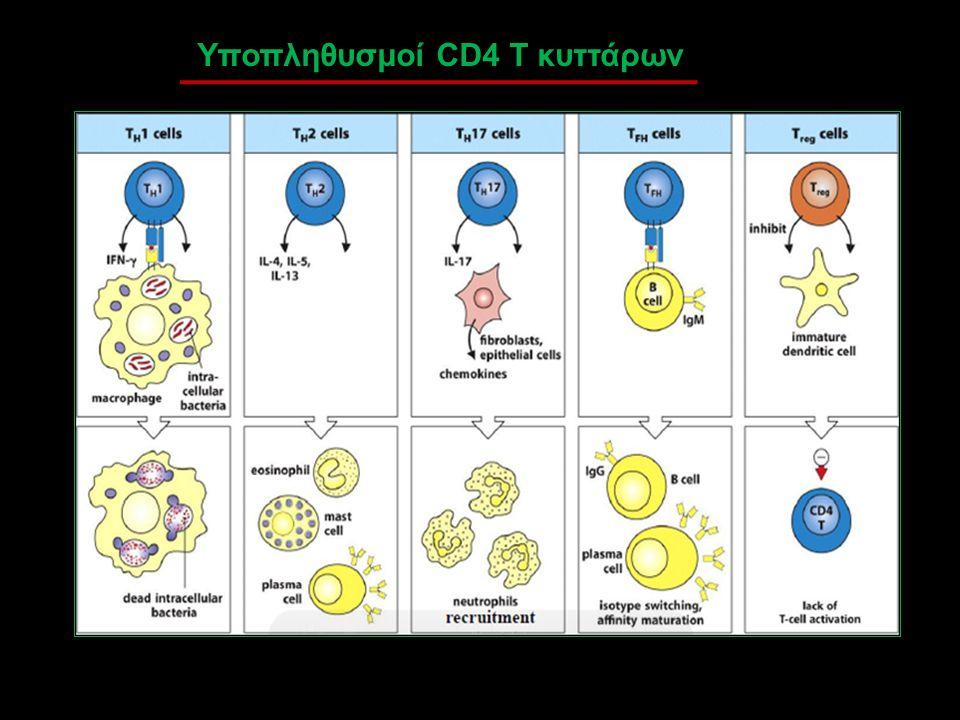 Υποπληθυσμοί CD4 T κυττάρων