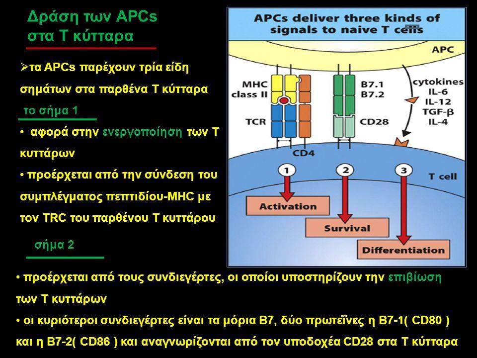Δράση των APCs στα Τ κύτταρα  τα APCs παρέχουν τρία είδη σημάτων στα παρθένα Τ κύτταρα το σήμα 1 αφορά στην ενεργοποίηση των Τ κυττάρων προέρχεται απ