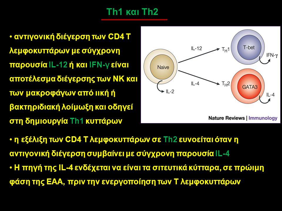Th1 και Th2 αντιγονική διέγερση των CD4 T λεμφοκυττάρων με σύγχρονη παρουσία IL-12 ή και IFN-γ είναι αποτέλεσμα διέγερσης των ΝΚ και των μακροφάγων απ