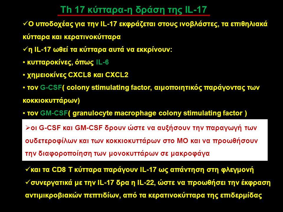 Th 17 κύτταρα-η δράση της IL-17 Ο υποδοχέας για την IL-17 εκφράζεται στους ινοβλάστες, τα επιθηλιακά κύτταρα και κερατινοκύτταρα η IL-17 ωθεί τα κύττα