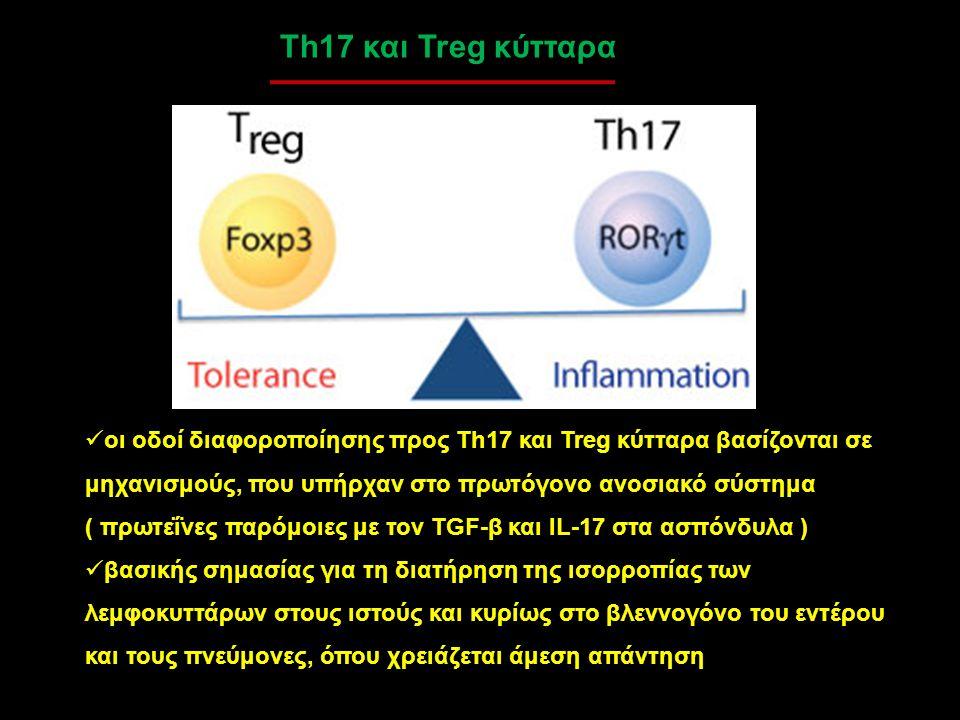 Th17 και Treg κύτταρα οι οδοί διαφοροποίησης προς Th17 και Treg κύτταρα βασίζονται σε μηχανισμούς, που υπήρχαν στο πρωτόγονο ανοσιακό σύστημα ( πρωτεΐ