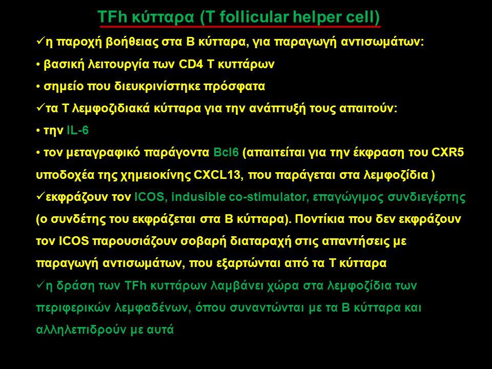 TFh κύτταρα (T follicular helper cell) η παροχή βοήθειας στα Β κύτταρα, για παραγωγή αντισωμάτων: βασική λειτουργία των CD4 T κυττάρων σημείο που διευ
