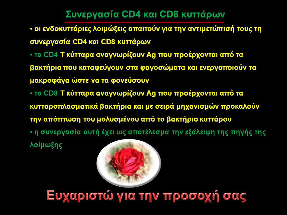 Συνεργασία CD4 και CD8 κυττάρων οι ενδοκυττάριες λοιμώξεις απαιτούν για την αντιμετώπισή τους τη συνεργασία CD4 και CD8 κυττάρων τα CD4 Τ κύτταρα αναγ