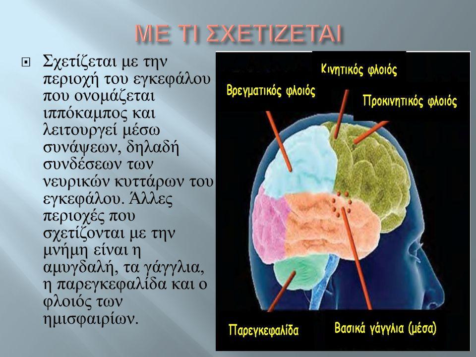  Σχετίζεται με την περιοχή του εγκεφάλου που ονομάζεται ιππόκαμπος και λειτουργεί μέσω συνάψεων, δηλαδή συνδέσεων των νευρικών κυττάρων του εγκεφάλου