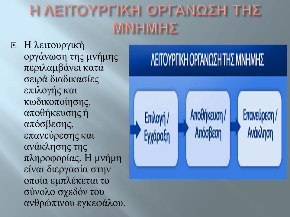  Η λειτουργική οργάνωση της μνήμης περιλαμβάνει κατά σειρά διαδικασίες επιλογής και κωδικοποίησης, αποθήκευσης ή απόσβεσης, επανεύρεσης και ανάκλησης