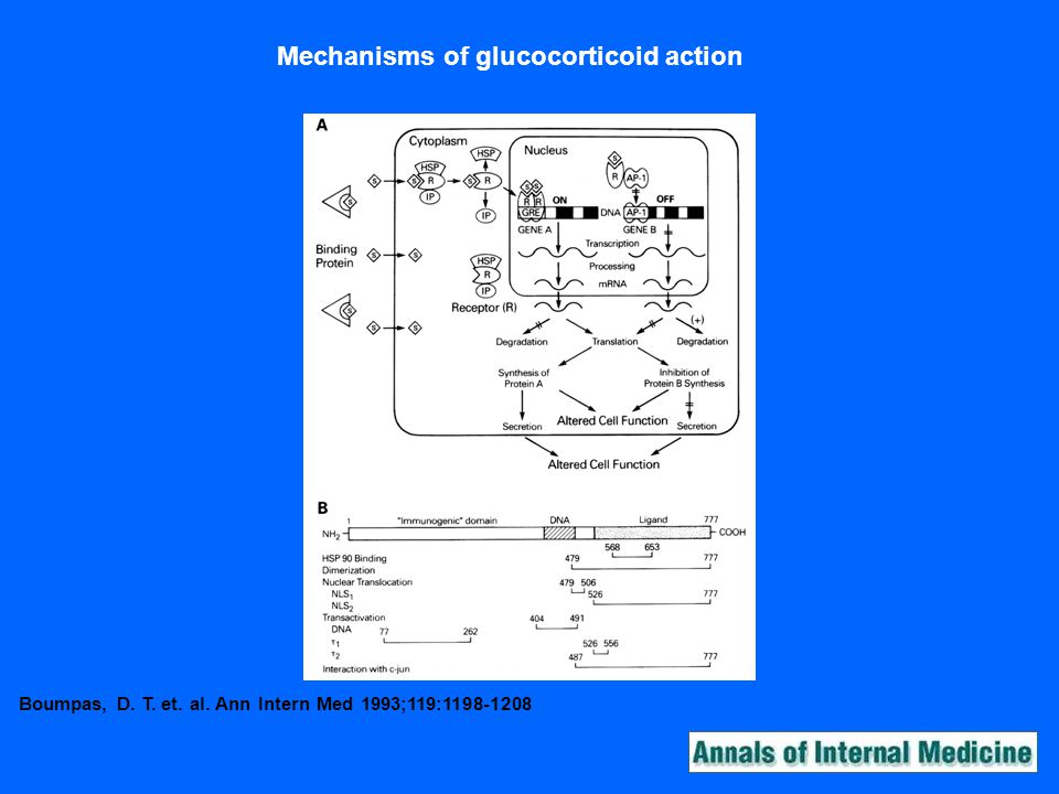 Boumpas, D. T. et. al. Ann Intern Med 1993;119:1198-1208 Mechanisms of glucocorticoid action