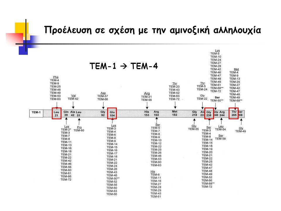 Προέλευση σε σχέση με την αμινοξική αλληλουχία TEM-1  TEM-4