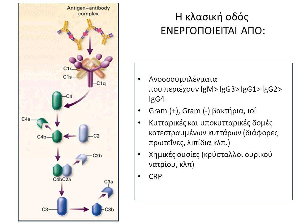 Η κλασική οδός ΕΝΕΡΓΟΠΟΙΕΙΤΑΙ ΑΠΟ: • Ανοσοσυμπλέγματα που περιέχουν IgM> IgG3> IgG1> IgG2> IgG4 • Gram (+), Gram (-) βακτήρια, ιοί • Κυτταρικές και υπ