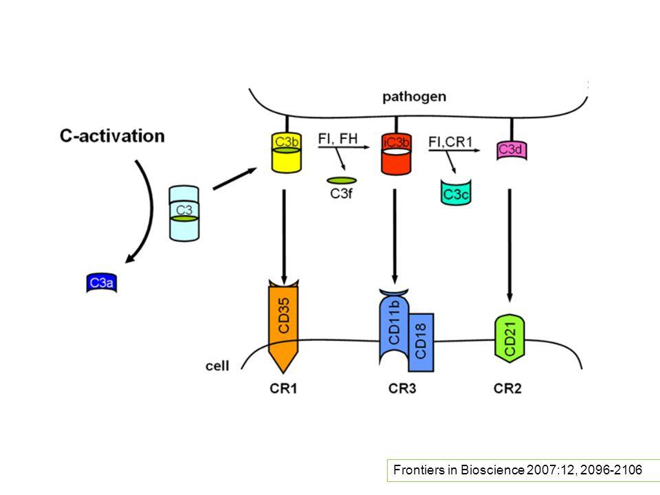 Frontiers in Bioscience 2007:12, 2096-2106