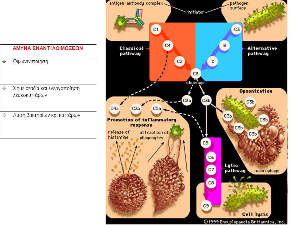 ΑΜΥΝΑ ΕΝΑΝΤΙ ΛΟΙΜΩΞΕΩΝ  Οψωνινιποίηση  Χημειοταξία και ενεργοποίηση λευκοκυττάρων  Λύση βακτηρίων και κυττάρων