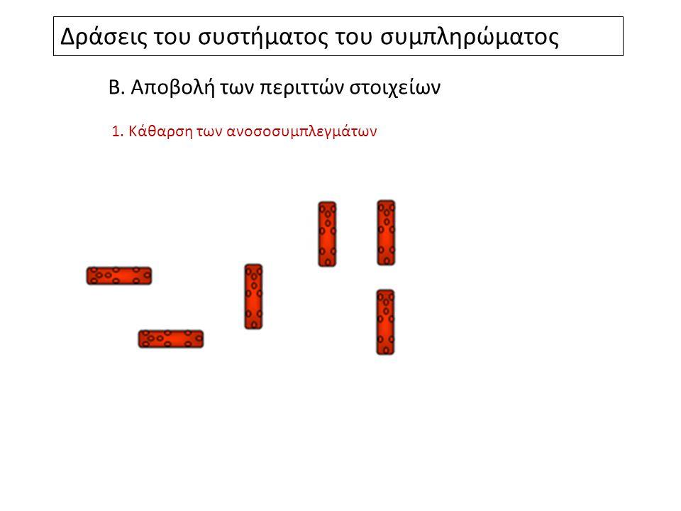 Δράσεις του συστήματος του συμπληρώματος Β.Αποβολή των περιττών στοιχείων 1.