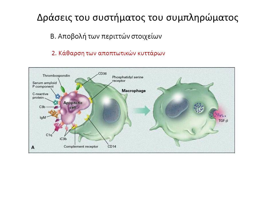 Δράσεις του συστήματος του συμπληρώματος Β. Αποβολή των περιττών στοιχείων 2. Κάθαρση των αποπτωτικών κυττάρων