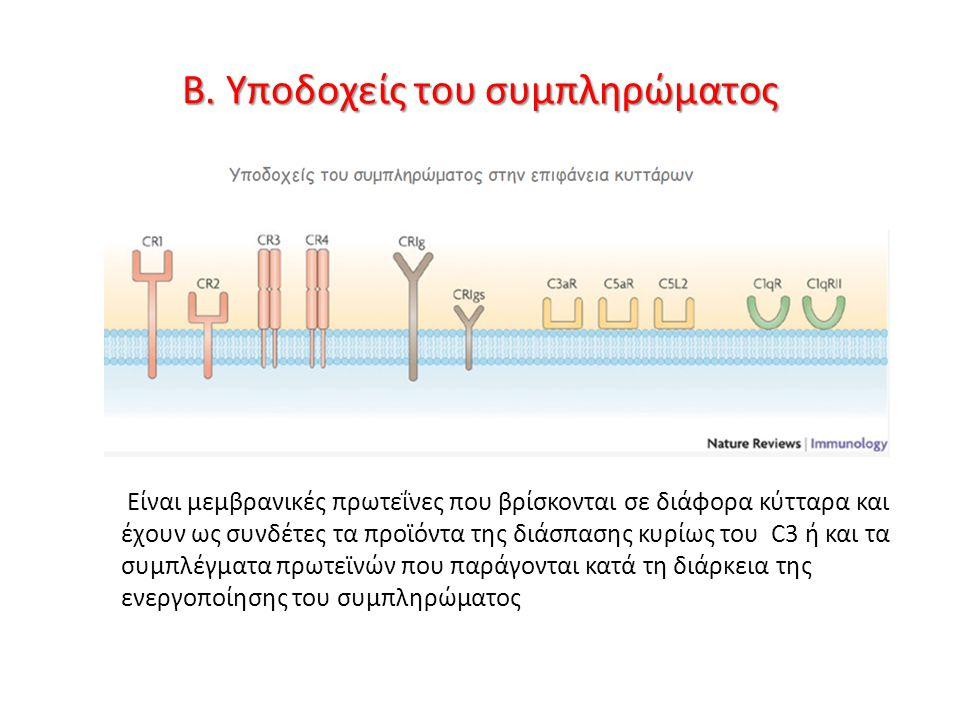 Β. Υποδοχείς του συμπληρώματος Είναι μεμβρανικές πρωτεΐνες που βρίσκονται σε διάφορα κύτταρα και έχουν ως συνδέτες τα προϊόντα της διάσπασης κυρίως το