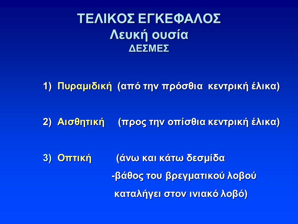 ΤΕΛΙΚΟΣ ΕΓΚΕΦΑΛΟΣ Λευκή ουσία ΔΕΣΜΕΣ 1) Πυραμιδική (από την πρόσθια κεντρική έλικα) 2) Αισθητική (προς την οπίσθια κεντρική έλικα) 3) Οπτική (άνω και κάτω δεσμίδα -βάθος του βρεγματικού λοβού καταλήγει στον ινιακό λοβό) 1) Πυραμιδική (από την πρόσθια κεντρική έλικα) 2) Αισθητική (προς την οπίσθια κεντρική έλικα) 3) Οπτική (άνω και κάτω δεσμίδα -βάθος του βρεγματικού λοβού καταλήγει στον ινιακό λοβό)