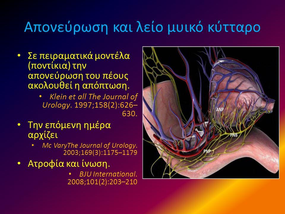 Απονεύρωση και λείο μυικό κύτταρο • Σε πειραματικά μοντέλα (ποντίκια) την απονεύρωση του πέους ακολουθεί η απόπτωση. • Klein et all The Journal of Uro