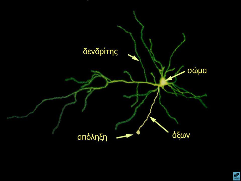 ντοπαμίνη υποδοχέας ντοπαμίνης