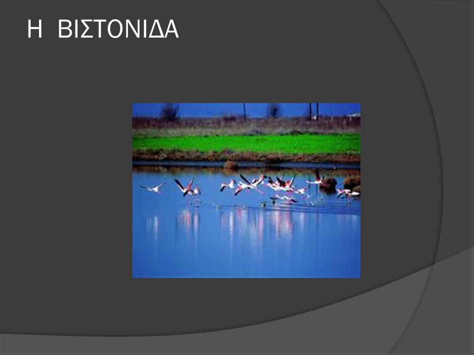ΓΕΝΙΚΑ ΣΤΟΙΧΕΙΑ  Η λίμνη Βιστωνίδα ή λίμνη Μπουρού (παλαιότερη ονομασία που χρησιμοποιείται και σήμερα [ ) ή Μπουρού Γκιόλ (ονομασία στα Τουρκικά την οποία έφερε επί οθωμανικής περιόδου) είναι λιμνοθάλασσα της Ελλάδας, στα σύνορα μεταξύ Νομού Ξάνθης και Ροδόπης και ο υγροβιότοπός τής προστατεύεται από τη σύμβαση Ραμσάρ.