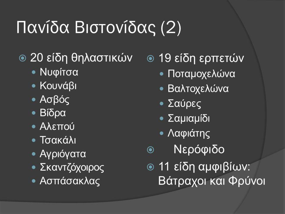 Πανίδα Βιστονίδας (2)  20 είδη θηλαστικών  Νυφίτσα  Κουνάβι  Ασβός  Βίδρα  Αλεπού  Τσακάλι  Αγριόγατα  Σκαντζόχοιρος  Ασπάσακλας  19 είδη ε