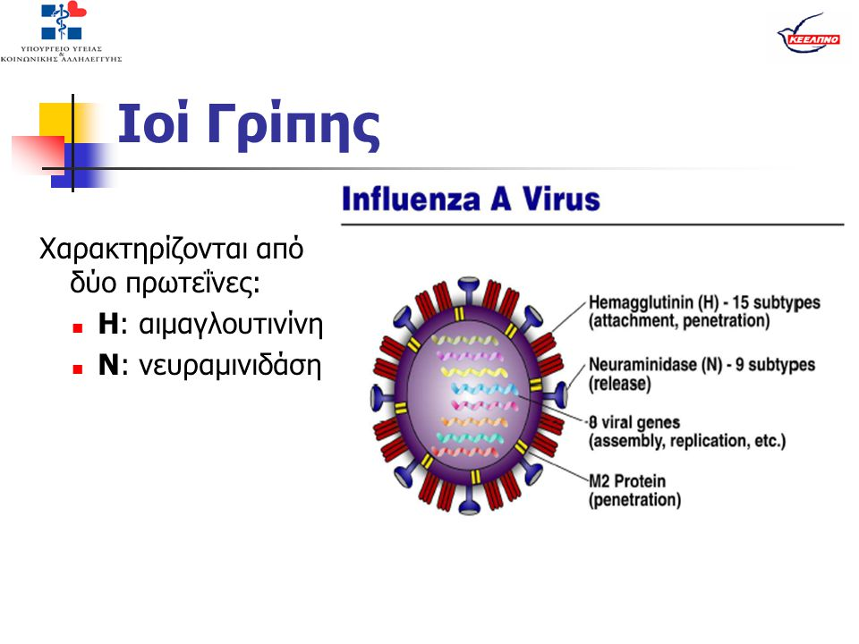 Ιοί Γρίπης Χαρακτηρίζονται από δύο πρωτεΐνες:  Η: αιμαγλουτινίνη  Ν: νευραμινιδάση