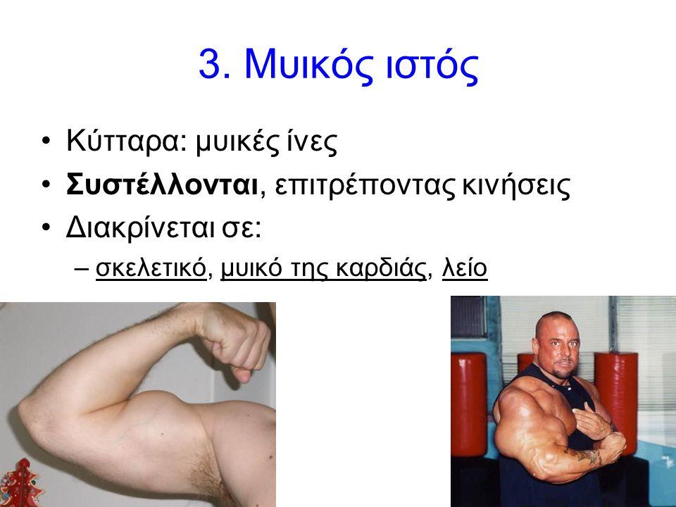 18 3. Μυικός ιστός •Κύτταρα: μυικές ίνες •Συστέλλονται, επιτρέποντας κινήσεις •Διακρίνεται σε: –σκελετικό, μυικό της καρδιάς, λείο