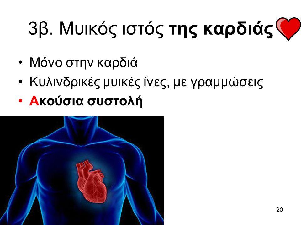 20 3β. Μυικός ιστός της καρδιάς •Μόνο στην καρδιά •Κυλινδρικές μυικές ίνες, με γραμμώσεις •Ακούσια συστολή