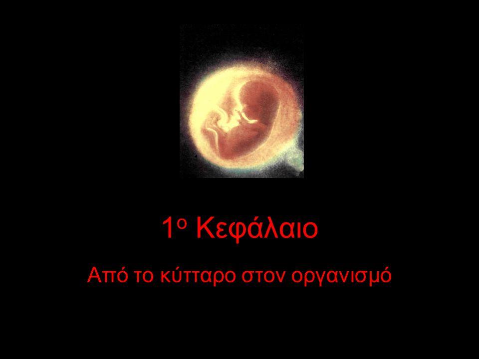8 Κύτταρα & ιστοί •Άνθρωπος = τρις κύτταρα •Ποικιλομορφία •Όλα προέρχονται από το ζυγωτό, με αλλεπάλληλες μιτωτικές διαιρέσεις •Διαφοροποίηση (μορφολογική-λειτουργική) •«Ιστός: κύτταρα μορφολογικά όμοια, που συμμετέχουν στην ίδια λειτουργία» •4 είδη ιστών: –επιθηλιακός, μυικός, ερειστικός, νευρικός
