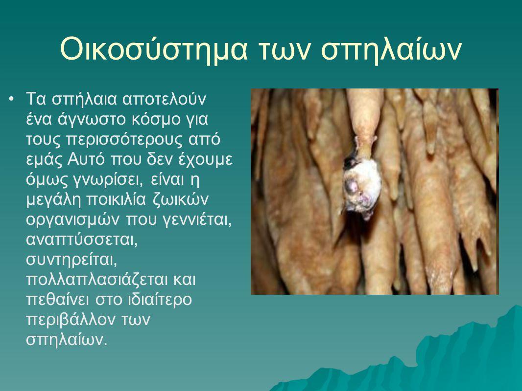 Οικοσύστημα των σπηλαίων •Τα σπήλαια αποτελούν ένα άγνωστο κόσμο για τους περισσότερους από εμάς Αυτό που δεν έχουμε όμως γνωρίσει, είναι η μεγάλη ποι