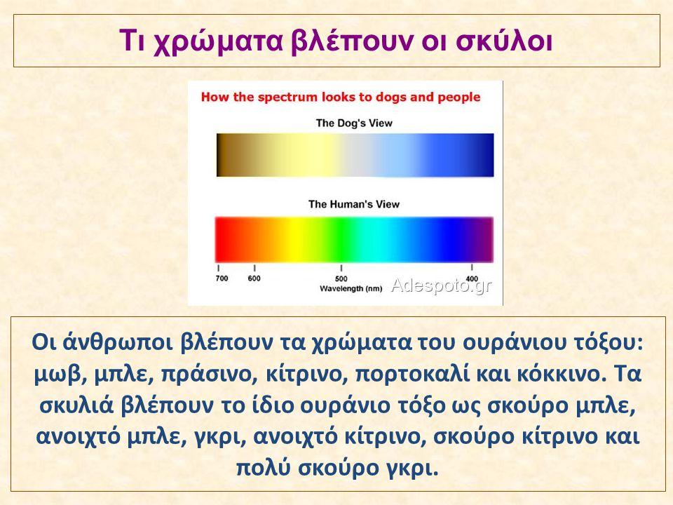Οι άνθρωποι βλέπουν τα χρώματα του ουράνιου τόξου: μωβ, μπλε, πράσινο, κίτρινο, πορτοκαλί και κόκκινο. Τα σκυλιά βλέπουν το ίδιο ουράνιο τόξο ως σκούρ