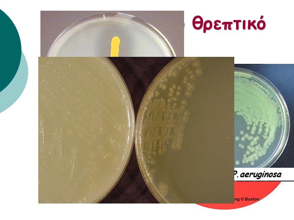 Σύσταση αποικίας Klebsiella pneumoniae Candida albicans Nocardia asteroides