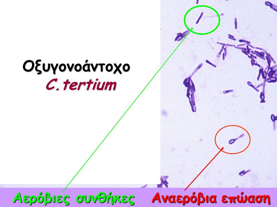 3.Μικροσκοπική εξέταση μορφολογίας μικροβίου (Gram χρώση)  Gram (+), Gram(-)  Βακτηριακό κύτταρο: σχήμα, μέγεθος, διάταξη, παρουσία ειδικών σχηματισ