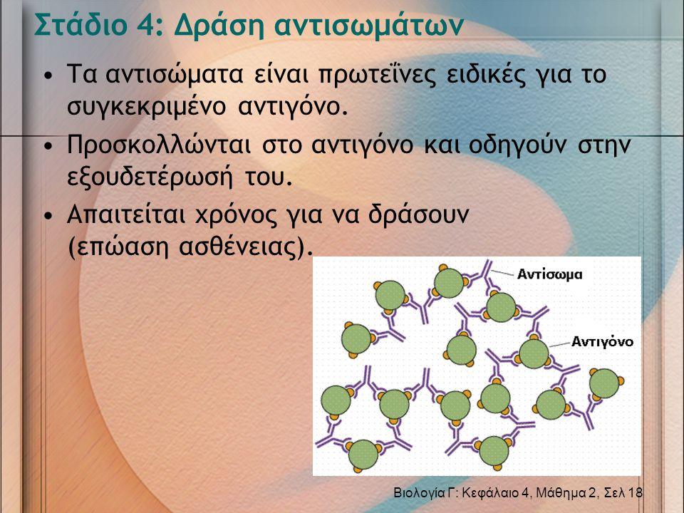 Στάδιο 4: Δράση αντισωμάτων •Τα αντισώματα είναι πρωτεΐνες ειδικές για το συγκεκριμένο αντιγόνο. •Προσκολλώνται στο αντιγόνο και οδηγούν στην εξουδετέ