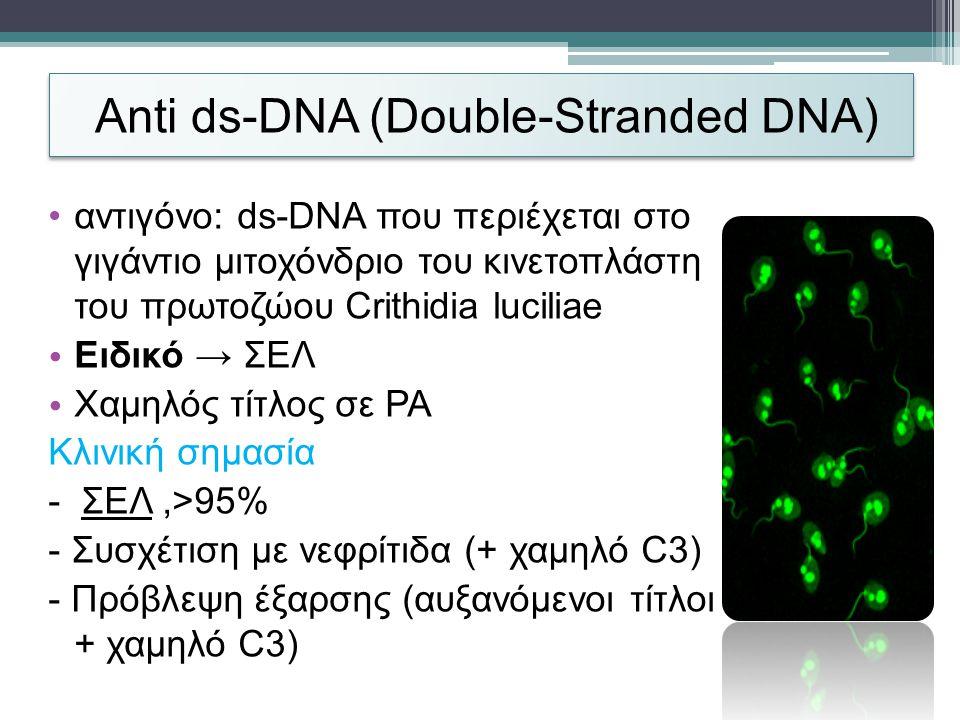 Anti ds-DNΑ (Double-Stranded DNA) •αντιγόνο: ds-DNA που περιέχεται στο γιγάντιο μιτοχόνδριο του κινετοπλάστη του πρωτοζώου Crithidia luciliae • Ειδικό → ΣΕΛ • Χαμηλός τίτλος σε ΡΑ Κλινική σημασία - ΣΕΛ,>95% - Συσχέτιση με νεφρίτιδα (+ χαμηλό C3) - Πρόβλεψη έξαρσης (αυξανόμενοι τίτλοι + χαμηλό C3)