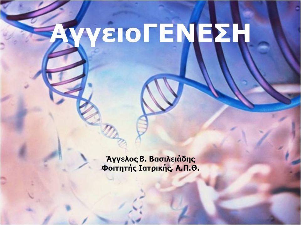 ΑΓΓΕΙΟΓΕΝΕΣΗ  Η ΑΓΓΕΙΟΓΕΝΕΣΗ είναι η φυσιολογική διαδικασία που περιλαμβάνει την ανάπτυξη νέων αγγείων από τα είδη υπάρχοντα αγγεία.