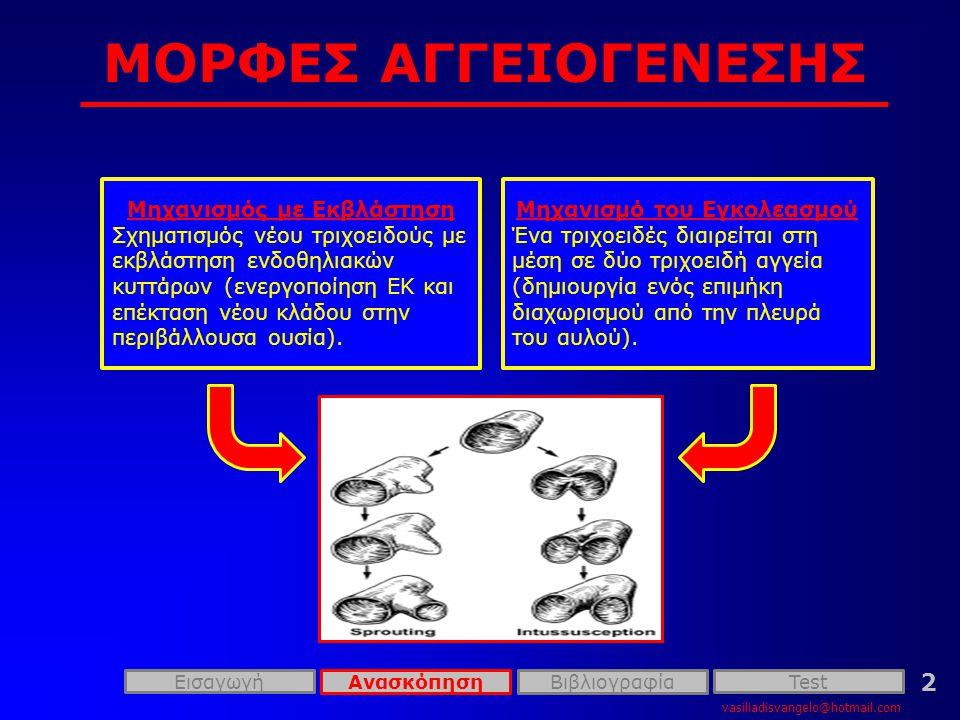 ΜΟΡΦΕΣ ΑΓΓΕΙΟΓΕΝΕΣΗΣ vasiliadisvangelo@hotmail.com Εισαγωγή 2 Μηχανισμός με Εκβλάστηση Σχηματισμός νέου τριχοειδούς με εκβλάστηση ενδοθηλιακών κυττάρων (ενεργοποίηση ΕΚ και επέκταση νέου κλάδου στην περιβάλλουσα ουσία).