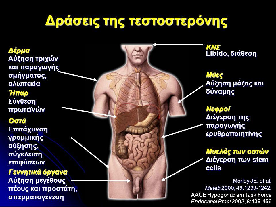 Δέρμα Αύξηση τριχών και παραγωγής σμήγματος, αλωπεκία Ήπαρ Σύνθεση πρωτεϊνών Γεννητικά όργανα Αύξηση μεγέθους πέους και προστάτη, σπερματογένεση ΚΝΣ Libido, διάθεση Μύες Αύξηση μάζας και δύναμης Νεφροί Διέγερση της παραγωγής ερυθροποιητίνης Μυελός των οστών Διέγερση των stem cells Οστά Επιτάχυνση γραμμικής αύξησης, σύγκλειση επιφύσεων Δράσεις της τεστοστερόνης Morley JE, et al.