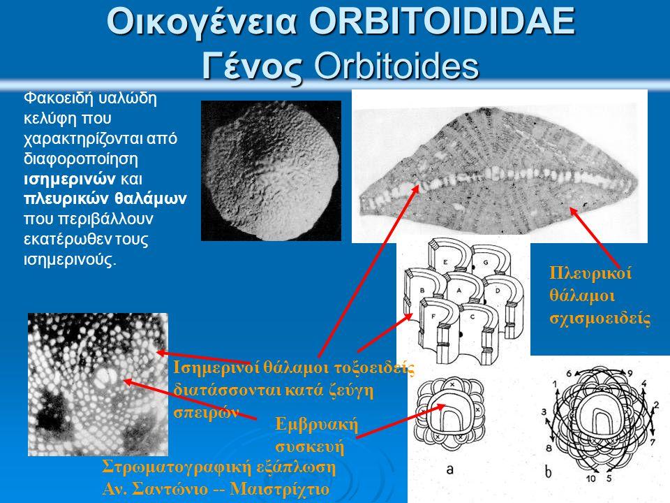 Οικογένεια ORTHOPHRAGMINIDAE Kέλυφος φακοειδές, με οξύληκτη περιφέρεια, με ποικίλσεις κοκκία που περιβάλλονται από ρόδακες (γένος Discocyclina GÜMBEL 1870) ή φέρουν ακτινοειδείς παχύνσεις που αντιστοιχούν σε πολλαπλασιασμό των πλευρικών θαλάμων χωρίς αντίστοιχη αύξηση των ισημερινών θαλάμων (γένος Aktinocyclina GÜMBEL 1870), ή έχουν αστεροειδές σχήμα με αντίστοιχο τοπικό πολλαπλασιασμό των επιπέδων των ισημερινών θαλάμων (γένος Asterodiscus SCHAFHÄUTL 1863).