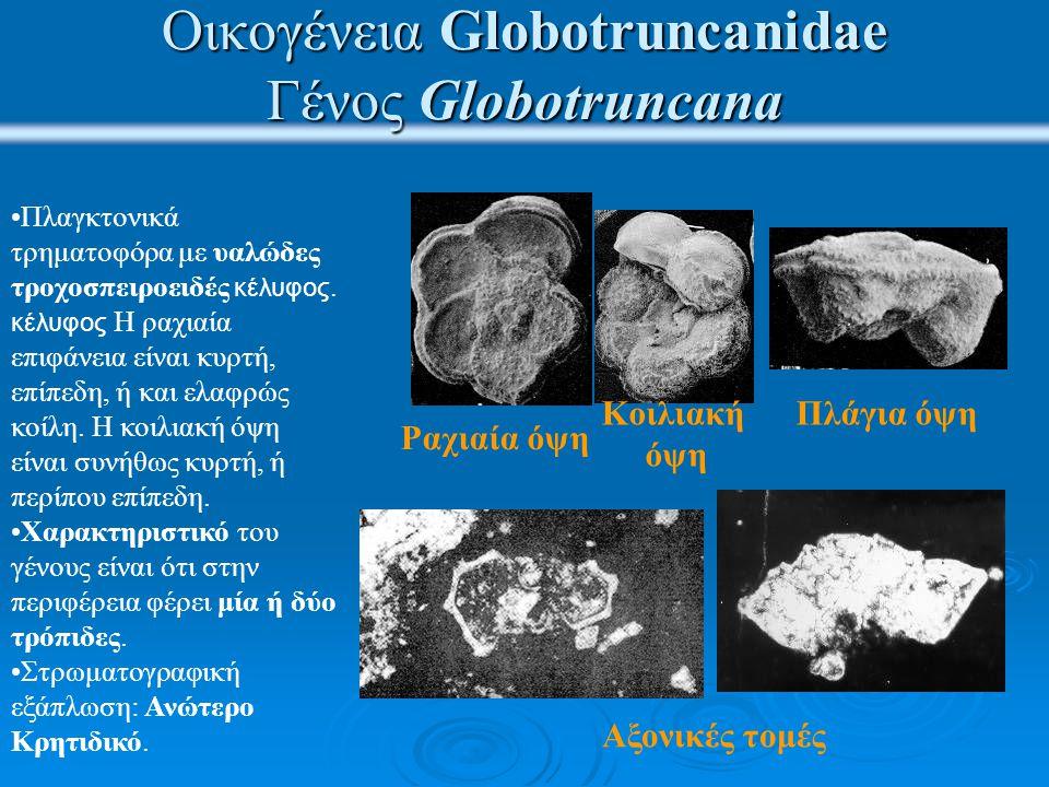 Ασβεστόλιθοι με Globotruncanidae