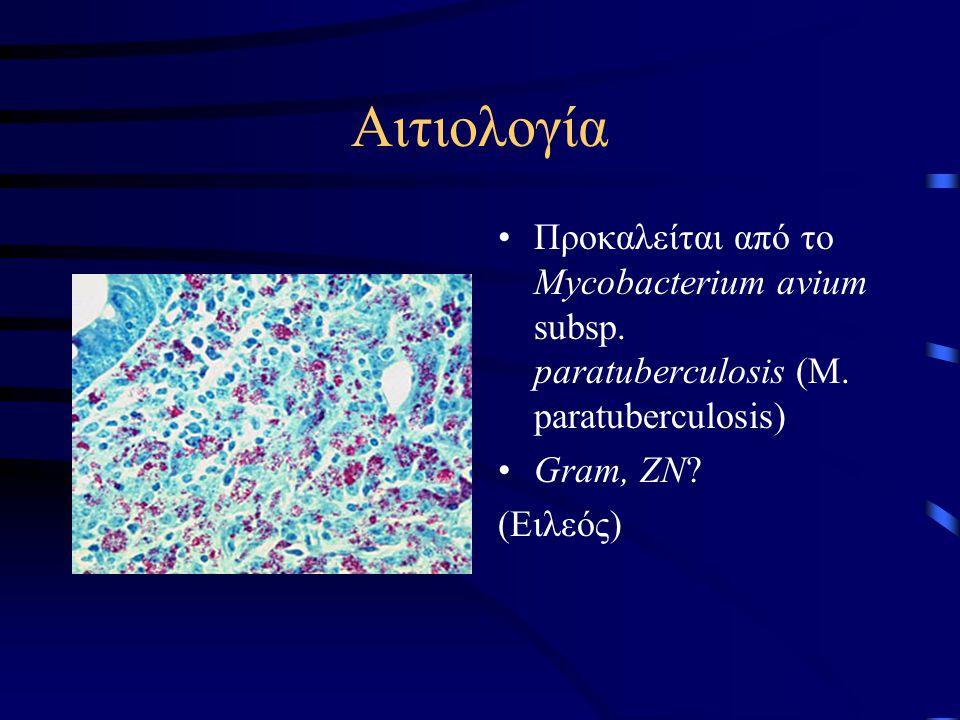 Αιτιολογία •Προκαλείται από το Mycobacterium avium subsp. paratuberculosis (M. paratuberculosis) •Gram, ZN? (Ειλεός)