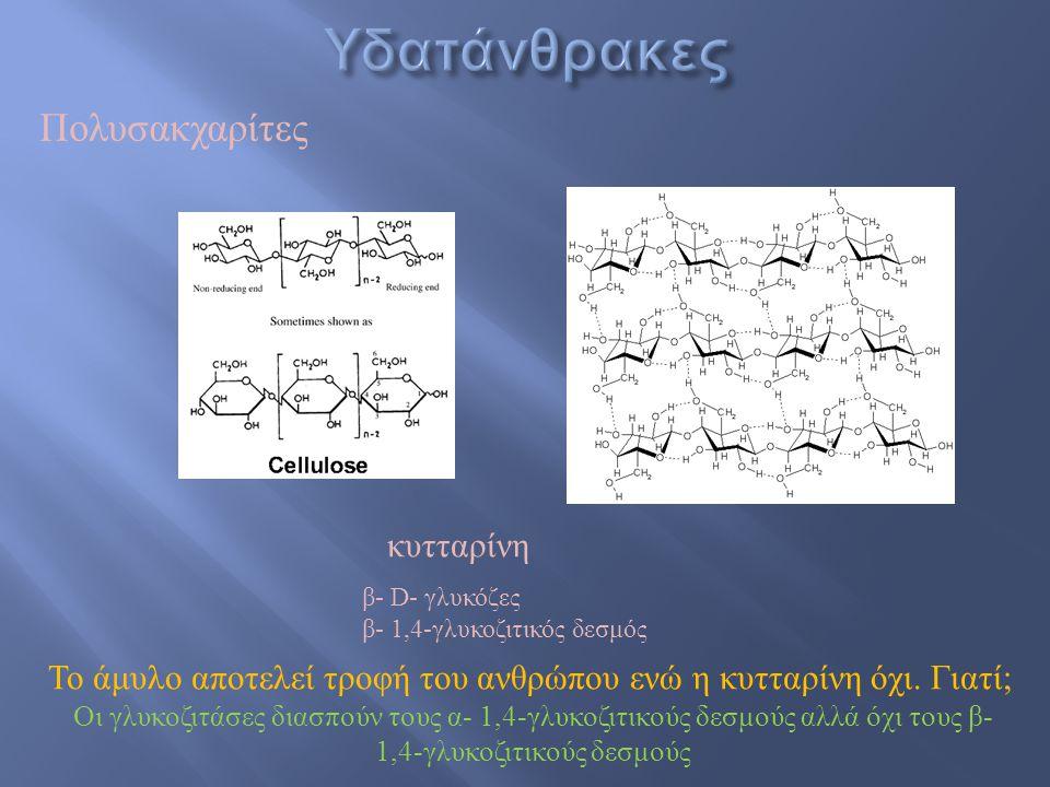 Πολυσακχαρίτες κυτταρίνη β- D- γλυκόζες β- 1,4-γλυκοζιτικός δεσμός Το άμυλο αποτελεί τροφή του ανθρώπου ενώ η κυτταρίνη όχι. Γιατί; Οι γλυκοζιτάσες δι