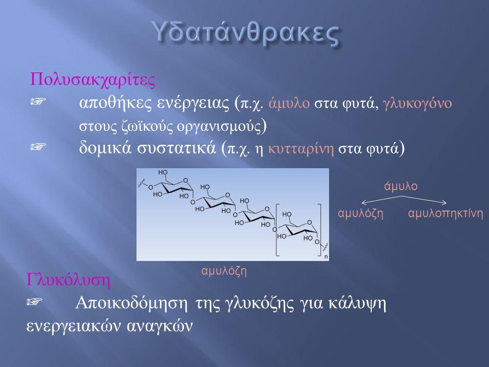 ☞ Αλδεϋδομάδα  αλδόζη ☞ Κετονομάδα  κετόζη ☞ 3 άτομα C  τριόζη ☞ 4 άτομα C  τετρόζη ☞ 5 άτομα C  πεντόζη ☞ 6 άτομα C  εξόζη  Γλυκόζη αλδοεξόζη  Ριβόζη αλδοπεντόζη  Φρουκτόζη κετοεξόζη