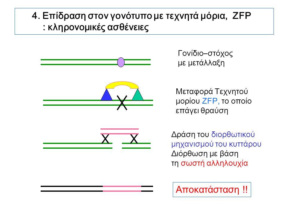 4. Επίδραση στον γονότυπο με τεχνητά μόρια, ZFP : κληρονομικές ασθένειες Γονίδιο–στόχος με μετάλλαξη Μεταφορά Τεχνητού μορίου ZFP, το οποίο επάγει θρα