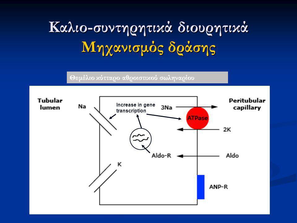Increase in gene transcription Καλιο-συντηρητικά διουρητικά Μηχανισμός δράσης Θεμέλιο κύτταρο αθροιστικού σωληναρίου