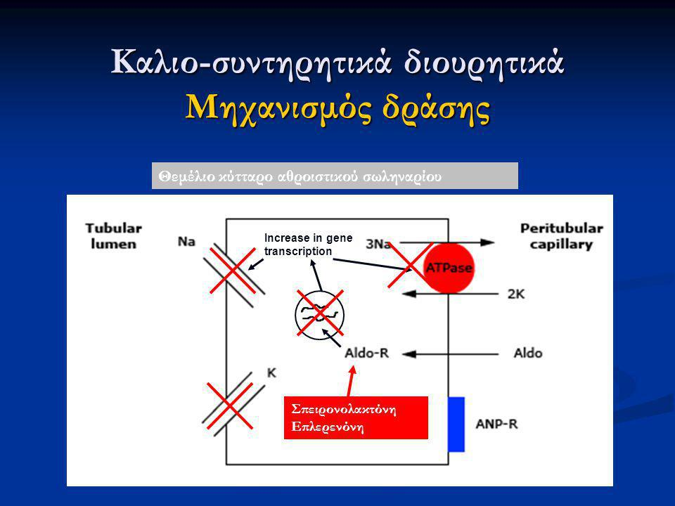 Increase in gene transcription Καλιο-συντηρητικά διουρητικά Μηχανισμός δράσης Θεμέλιο κύτταρο αθροιστικού σωληναρίου Σπειρονολακτόνη Επλερενόνη