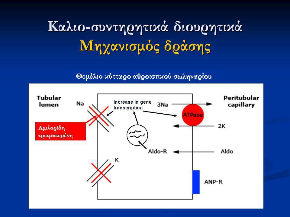 Increase in gene transcription Καλιο-συντηρητικά διουρητικά Μηχανισμός δράσης Θεμέλιο κύτταρο αθροιστικού σωληναρίου Αμιλορίδη τριαμπτερένη
