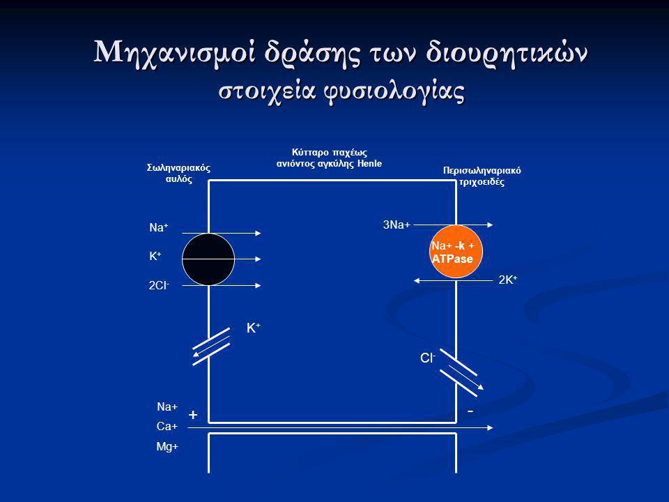 Σωληναριακός αυλός Κύτταρο παχέως ανιόντος αγκύλης Henle Περισωληναριακό τριχοειδές Na+ -k + ATPase Na + K + 2Cl - 2K + 3Na+ K+K+ Cl - + - Na+ Ca+ Mg+