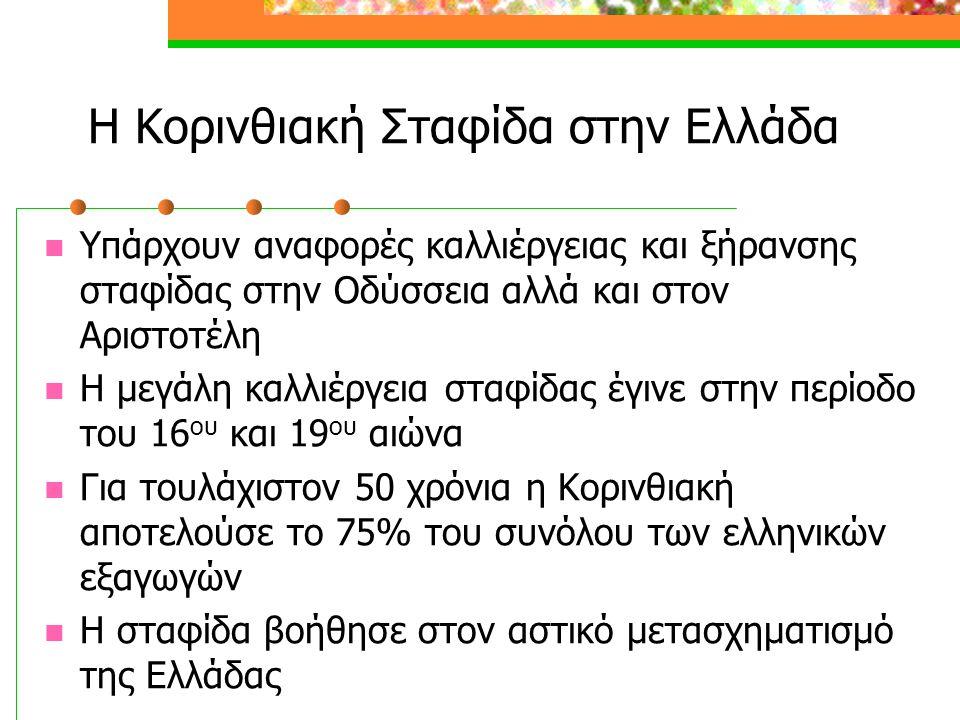 Η Κορινθιακή Σταφίδα στην Ελλάδα  Υπάρχουν αναφορές καλλιέργειας και ξήρανσης σταφίδας στην Οδύσσεια αλλά και στον Αριστοτέλη  Η μεγάλη καλλιέργεια σταφίδας έγινε στην περίοδο του 16 ου και 19 ου αιώνα  Για τουλάχιστον 50 χρόνια η Κορινθιακή αποτελούσε το 75% του συνόλου των ελληνικών εξαγωγών  Η σταφίδα βοήθησε στον αστικό μετασχηματισμό της Ελλάδας