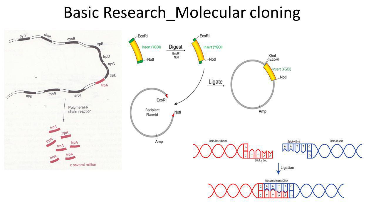 Basic Research_Molecular cloning